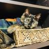【第2弾】猫の洋服を紹介♡