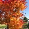 紅葉狩りドライブで終わりゆく秋を楽しむ