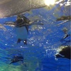 【続き】 客寄せパンダならぬ、客寄せペンギン? すみだ水族館へ行ってきました。