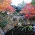 東京都中野区立紅葉山公園の紅葉が綺麗ですが、滝はいつ直りますか(2019/12/10)