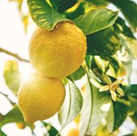 ローソンでおススメのレモン系おやつ3種!数量限定なのでお早めに!