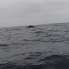 プエルトロペスでホエールウォッチング (船からクジラ見て楽しいのか?)