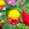 庭先にかわいいお花を咲かせているお家を見つけました~🤩