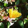 虫の写真 ちょうちょ 蝶々