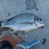 ぶっこみ釣りの基本 / シンプル仕掛けで多種多様な魚と出会えるチャンスをつかもう!
