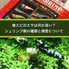 稚エビの飼育に適したエサとは?オススメの餌や与える頻度も徹底解説