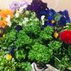 春に向けて、ガーデニング用にお花を買いました