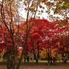 紅葉の散歩道で…