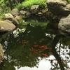 日本庭園に行きました