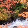 日光「竜頭の滝」に紅葉を見に行って参りました(*´ڡ`●)