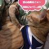 ココちゃんがお膝猫デビュー!?まさかの嫁さんが先だった!!(320日目)