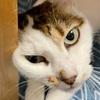 【臆病な猫】日々の生活と私の体験談㉘!!