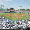 東京六大学野球の早慶戦はなぜ特別!?他の試合との違いをご紹介②