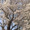 私の乳癌奮闘記その2(抗がん剤編)