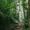 ハワイ・オアフ島のマノアの滝(Manoa falls trail)へ