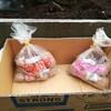 春への準備 ~ジャガイモ植え~