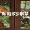 猫の庭散歩復活でニャルソックにやる気満々のニャンコ達!縄張りへの侵入者探索に夢中です!!