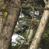 早春の林からメイプルシロップとウォルナッツシロップを!
