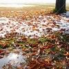 落ち葉 初冬
