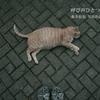 埼玉県蕨市 カフェスギタにて写真作品展「呼び声ひとつ」を開催いたします。