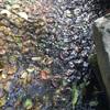 荻窪の大田黒公園で水のせせらぎに癒される
