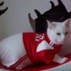 【速報動画集】サッカーW杯の予言は白猫アキレスくんにお任せニャ / Achilles The Cat Appointed As Oracle for FIFA World Cup