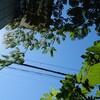 静かなジャズ流れるカフェ「シルクツリー」  in  棚倉町