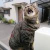 猫的押しメン