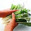 小松菜とほうれん草の栄養的な違い!鉄分が多いのはどっち?