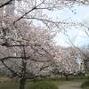 都心でお花見の穴場!旧芝離宮恩賜庭園