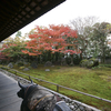 2010 京都紅葉前線レポ 11月23日(1)