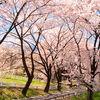 わたらせ渓谷鐵道&伊香保グリーン牧場ツアー【榛名雲海桜/桜のトンネル】