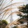 【223】墨田区東向島 輝くススキを探して百花園