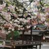 【平野神社】神道とは「今」を生きること
