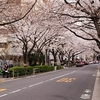 龍泉寺(目黒不動尊)の桜見てきた!【1】