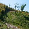出雲の山墾り〜竹の焼畑sec.11