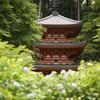 岩船寺で紫陽花と新緑と@2021
