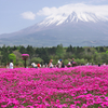 【撮影記vol.7】本栖・精進湖ドライブ~芝桜と湖の富士山コラボ~