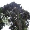木の合成&逆光の加工