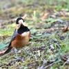野鳥撮影に行ってきました@東高根森林公園