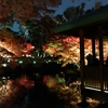 朱に染まる - Autumn leaves 🍁
