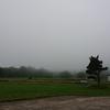 もはや曇りではなく霧。
