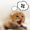 クサギカメムシがベランダから家に侵入!効果的な対策や対処法3つはこれだ!