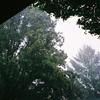 297. 雨上がり