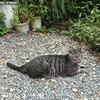 岩合光昭・世界猫歩きの京都の猫シマとツキに会いに行く