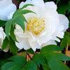 ご近所の花たちがすごく綺麗♪<暮らしを楽しむ>