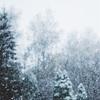冬が大好きな理由5つ!!