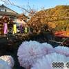 関東菊花大会「ながめ公園」で菊と紅葉