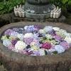 花手水を見に四国霊場第66番札所雲辺寺へ行きました