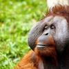 【妄想旅の計画②】インドネシアでお猿さんを探す旅
